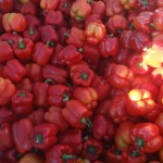 Spruce Ridge Farm - Red Bell Peppers