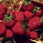 Spruce Ridge Farm - Strawberries